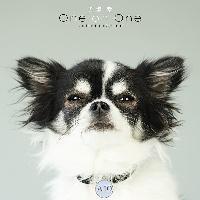犬塚愛 One on One Collaboration